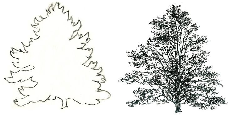 47 best images about Draw a tree on Pinterest
