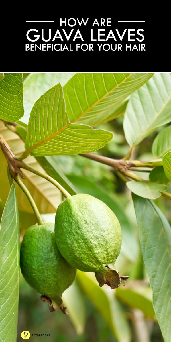 How Are Guava Leaves Beneficial For Your Hair Hair Loss
