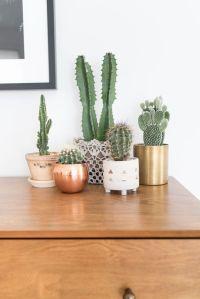 25+ best ideas about Cactus Decor on Pinterest | Colour ...