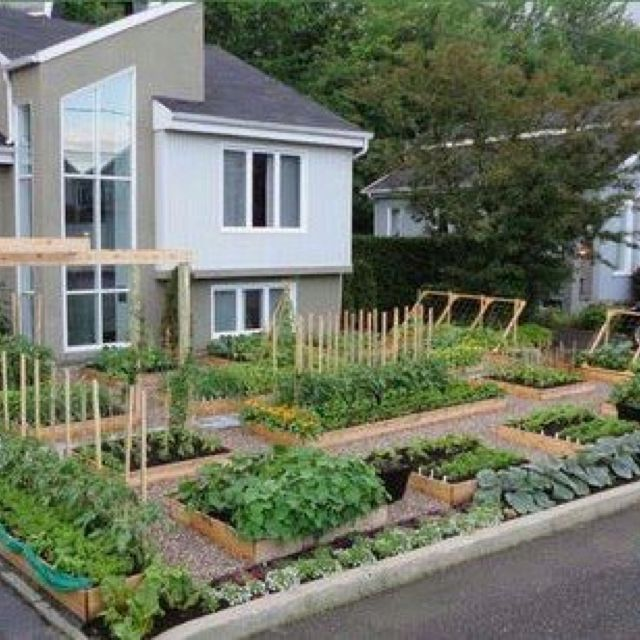 1000 images about Garden Edible Front Yard on Pinterest