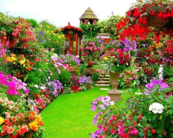 alice in wonderland backyard