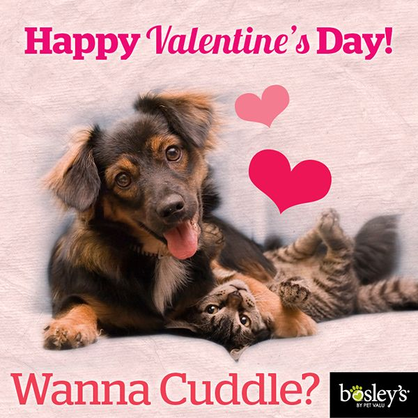 17 Best Images About Pet Amp Pet Lover Valentines On