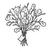 2798 best images about Magnolias on Pinterest