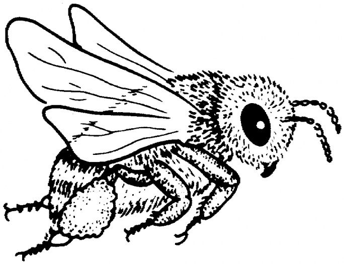60 best bee coloring pages images on Pinterest
