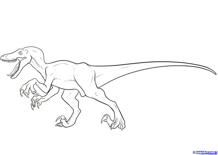 How to Draw a Velociraptor, Velociraptor, Step by Step