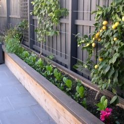 25 Best Ideas About Narrow Garden On Pinterest Small Gardens