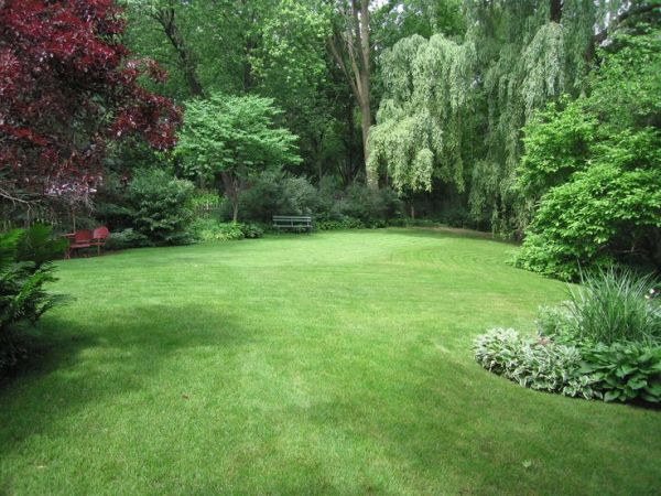 yard amazing open grass