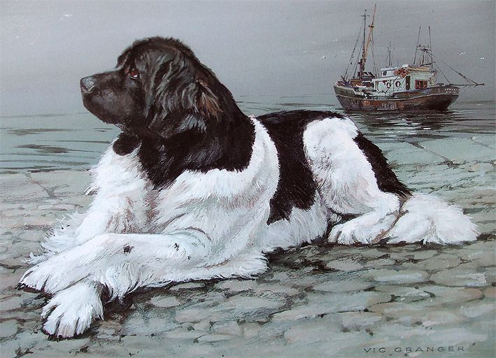 Newfoundland Limited Edition Print By Canine Artist Vic