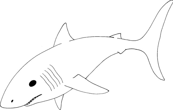 great-white-shark-coloring-pages2.jpg 800×511 pixels