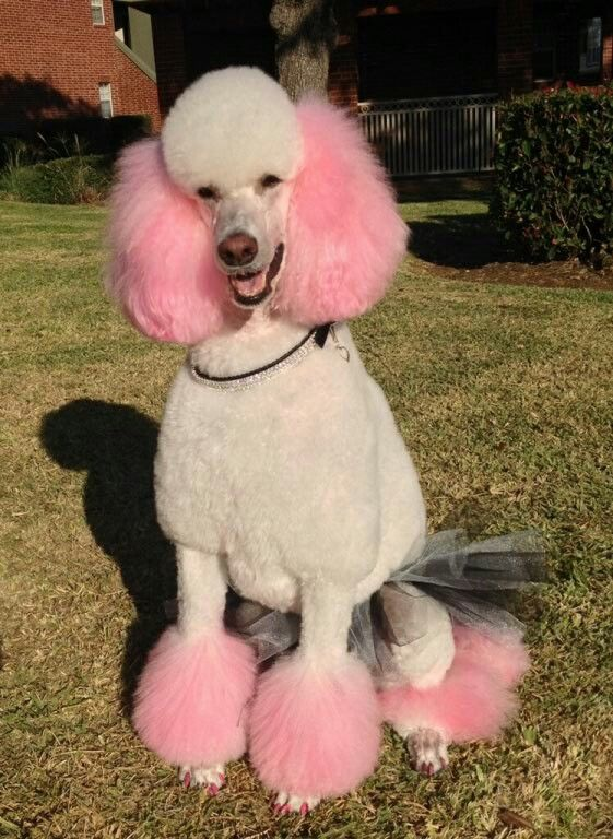 17 Best Images About Animals Dog Grooming On Pinterest