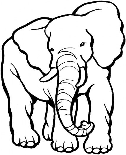113 best images about Kids-Zoo printables, coloring pages
