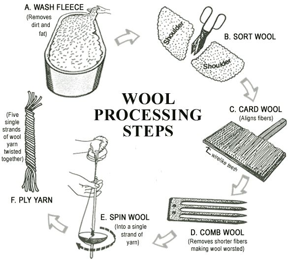 Diagram of the steps involved in the processing of Wool