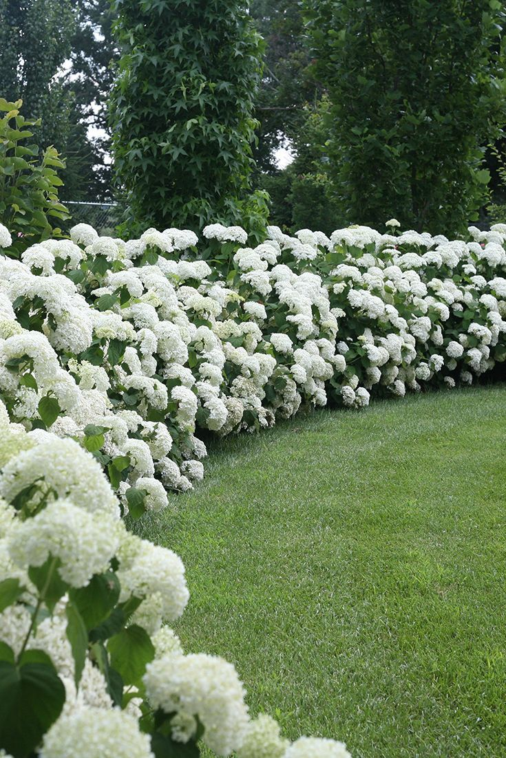 25 Best Ideas About White Gardens On Pinterest Flowers By Post