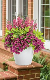 25+ best ideas about Container plants on Pinterest ...