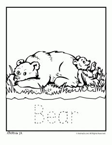 1000+ images about Preschool Theme: Bears on Pinterest