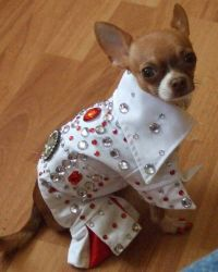 375 best images about Best Dressed Pets on Pinterest ...