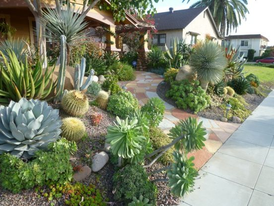 25 Best Ideas About Outdoor Cactus Garden On Pinterest Cactus
