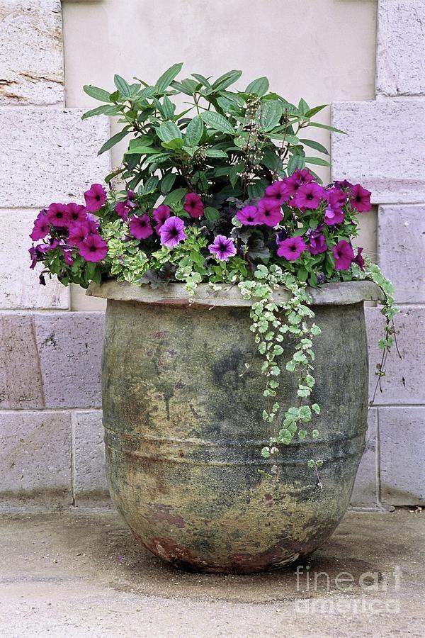 25 Best Ideas About Large Pots On Pinterest Large Garden Pots