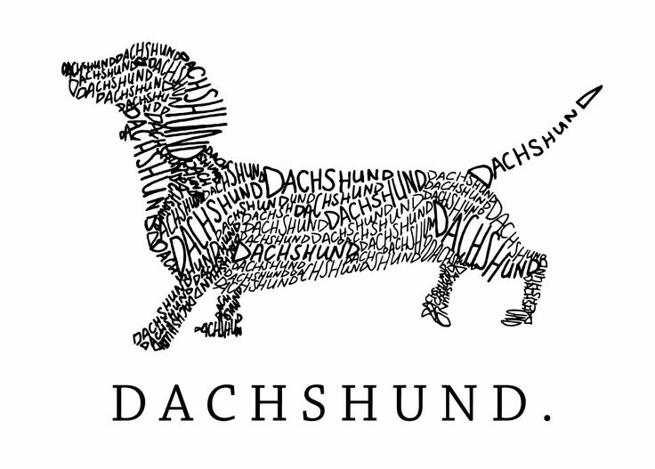 25+ Best Ideas about Dachshund Drawing on Pinterest