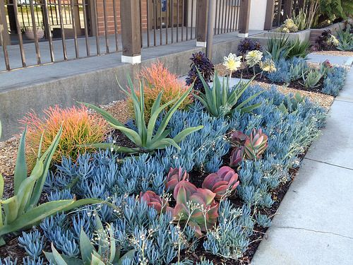 182 Best Images About Succulent Garden Designs On Pinterest