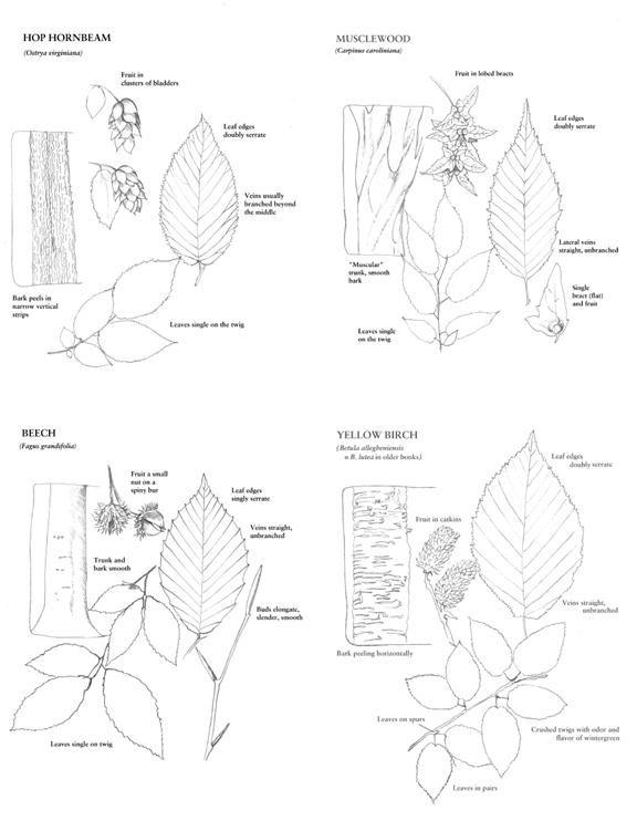 469 best images about arboretum ideas for community on