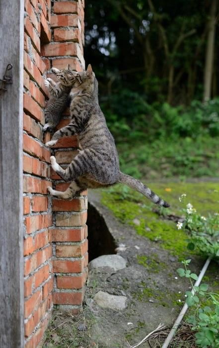 It is a fantastic moment, the photo, mom cat with baby during the jump to there home above.