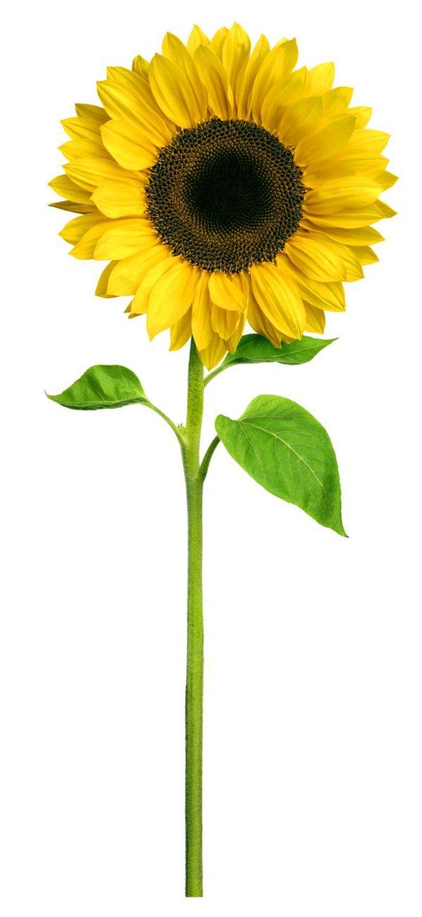 1000 sunflower hospice
