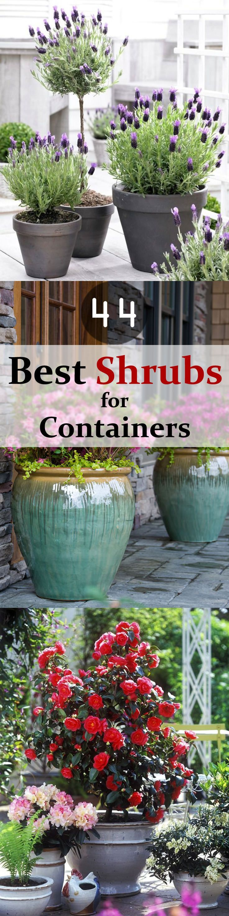 25 Best Ideas About Container Garden On Pinterest Gardening