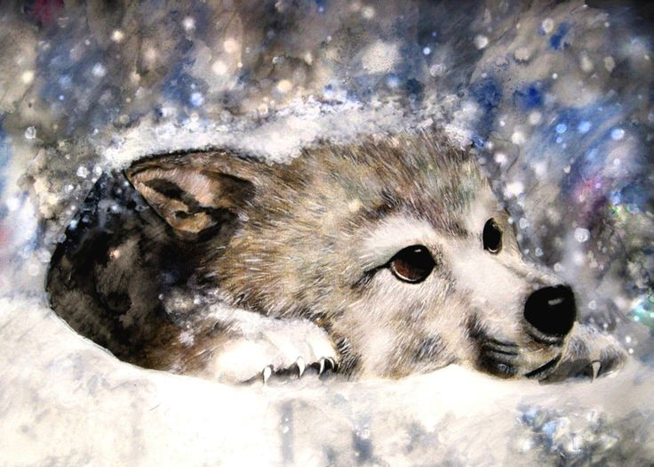 Cute Baby Boy Wallpapers For Facebook Profile Picture Wolf S Rain Kiba By Zhaot On Deviantart Amazing Fantasy