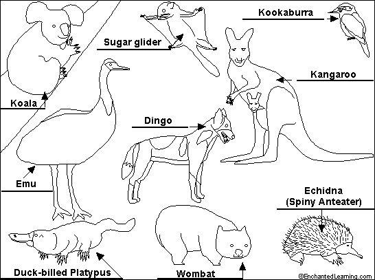 More Unique Australia Animals http://australian-animals