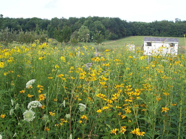17 Best Images About Prairie Winds Nature Farm Lakeville