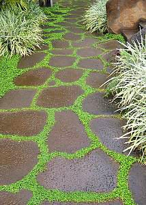 13 Best Images About Patio Front Of House Landscaping On