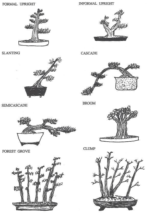 air bonsai floating