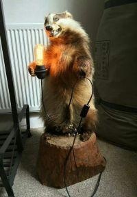 1000+ images about Taxidermy on Pinterest
