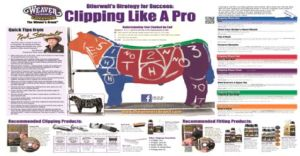 How to clip like a pro poster Very very helpfull for clipping steers   Show steerscattle