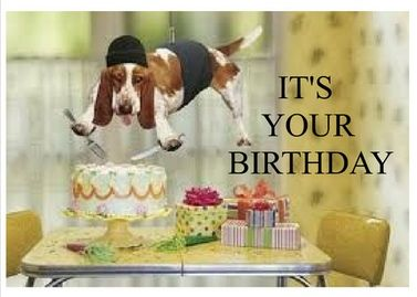 Birthday Card For A Dog Lover Hey They Dont Need To