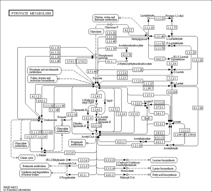 1000+ images about BCHM 2024: Concepts of Biochemistry on