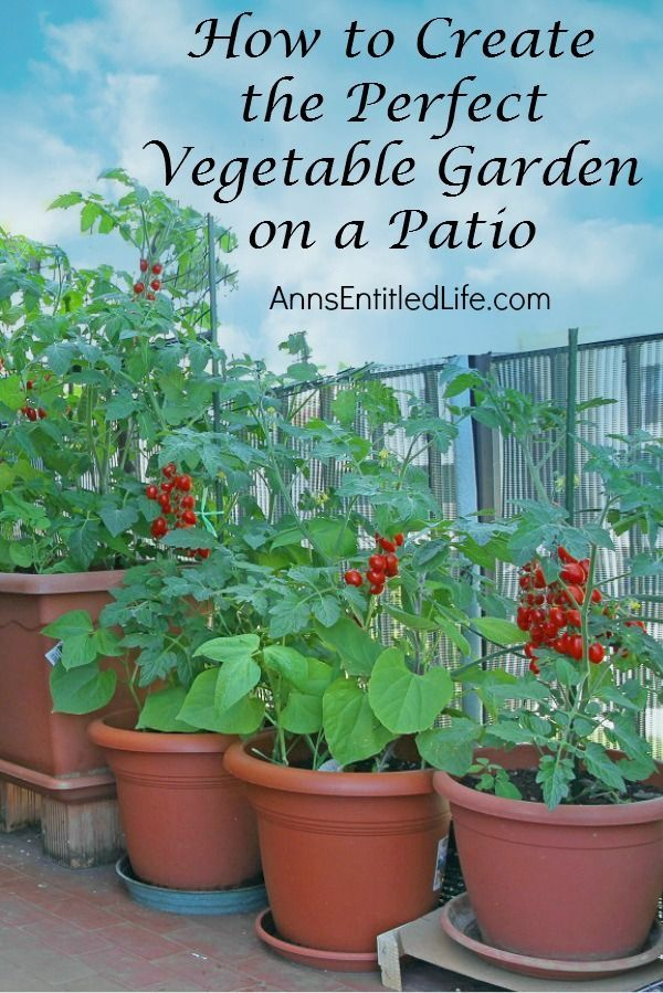 553 Best Images About Patio And Container Gardening On Pinterest