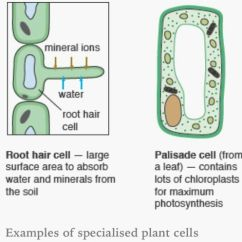 Easy Diagram Of Plant Cell Aftermarket Radio Wiring Specialised Cells. | Bio - Cells Pinterest And Aqa