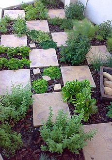 25 Best Ideas About Herb Garden Design On Pinterest Garden