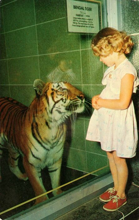 1000 Images About Tiger Who Came To Tea On Pinterest