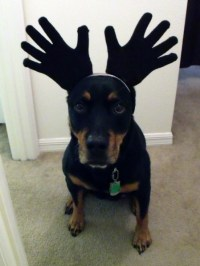 74 best images about MOOSE on Pinterest