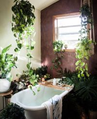 25+ best ideas about Plants in bathroom on Pinterest ...
