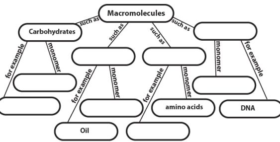 1000+ images about Macromolecules (B.9A) on Pinterest