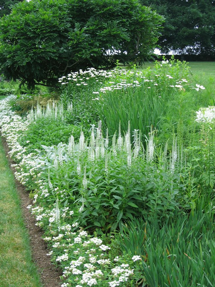 547 Best Images About A Garden White On Pinterest Gardens White