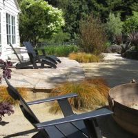 17 Best images about Front Yard Ideas on Pinterest | Olive ...