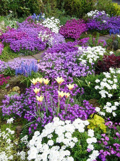 25 Best Ideas About Purple Garden On Pinterest Plants For Shade