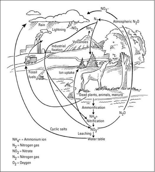 17 Best images about Nitrogen Cycle on Pinterest