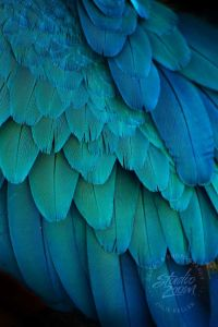 25+ best ideas about Feather Photography on Pinterest ...