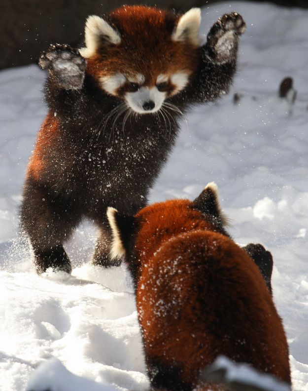 Attack !!!!!! That is so freakin adorable